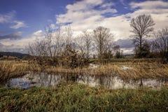 Vattenfågellivsmiljö med Marsh Grassesn fotografering för bildbyråer