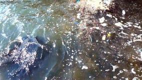 Vattenförorening med smutsig och plast- avskräde stock video