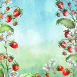 Vattenf?rgh?lsningkort, inbjudan med en v?xtjordgubbe Blomstra busken med ett r?d b?r och blomma royaltyfri illustrationer