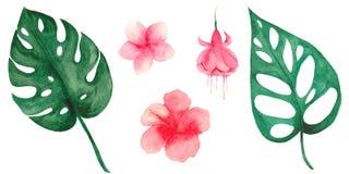 Vattenf?rgupps?ttning med tropiska sidor och blommor stock illustrationer