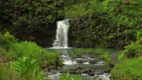 Vattenfall bland ett frodigt grönt landskap lager videofilmer