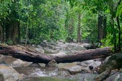 Vattenfall efter regn Vattenfall i skogen Fotografering för Bildbyråer