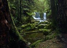 vattenfall för 2 tasmania Arkivbilder