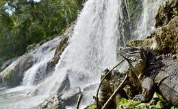 Vattenfall för El Nicho i Scambray berg Cienfuegos landskap, Kuba Royaltyfria Bilder