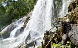 Vattenfall för El Nicho i Scambray berg Cienfuegos landskap, Kuba Royaltyfri Fotografi