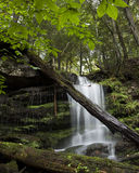 vattenfall för klyftaflodlax Arkivbild