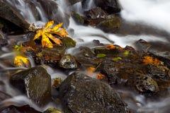 vattenfall för materiel för höstnaturfotografi Royaltyfri Fotografi