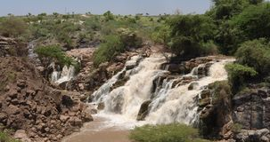 Vattenfall i Awash nationalpark stock video