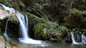 Vattenfall i carpathian skog stock video