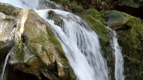 Vattenfall i carpathian skog arkivfilmer