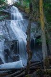 Vattenfall i Cedar Hemlock Forest royaltyfria foton