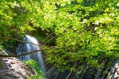 Vattenfall i den djupa mossaskogen, ren adn som är ny i Carpathians, Ukraina Arkivfoto