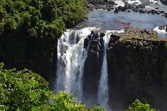 Vattenfall i den Iguazu nationalparken Royaltyfria Bilder