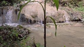 Vattenfall i den naturliga tropiska djungeln - Thailand stock video