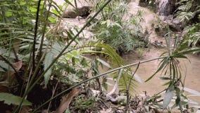 Vattenfall i den naturliga tropiska djungeln - Thailand 4K arkivfilmer