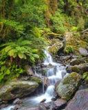 Vattenfall i den Nya Zeeland regnskogen Fotografering för Bildbyråer