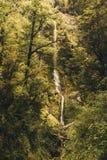 Vattenfall i den Nya Zeeland skogen Royaltyfria Bilder