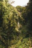 Vattenfall i den Nya Zeeland skogen Arkivbilder