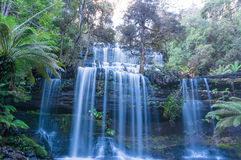 Vattenfall i den tropiska rainforesten Tasmanien Royaltyfria Bilder