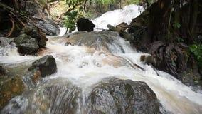 Vattenfall i den tropiska skogen arkivfilmer