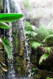 Vattenfall i djungel Royaltyfri Foto