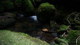 Vattenfall i djungeln stock video
