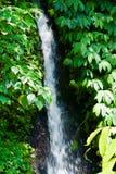 Vattenfall i en djungel Fotografering för Bildbyråer