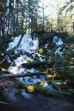Vattenfall i en Forrest arkivbilder