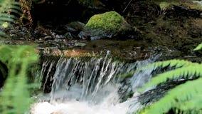Vattenfall i en rainforest arkivfilmer