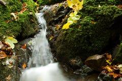 Vattenfall i höstskog Arkivfoton