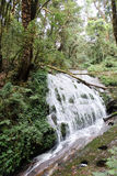Vattenfall i Kew Mae Pan Nature Trail Royaltyfri Fotografi