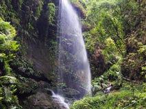 Vattenfall i mitt av den Canarian djungeln på La Palma, en kanariefågelö arkivbilder