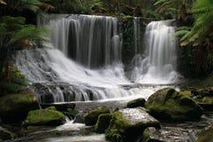 Vattenfall i monteringsfältnationalparken Tasmanien Arkivfoton