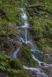 Vattenfall i mossan och stenarna för skoggräsplan Sommar Royaltyfria Bilder