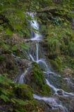 Vattenfall i mossan och stenarna för skoggräsplan Sommar Royaltyfri Fotografi