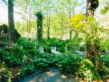 Vattenfall i nationalparkPlitvice sjöarna, Kroatien Waterfal Fotografering för Bildbyråer