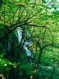 Vattenfall i nationalparkPlitvice sjöarna, Kroatien Waterfal Arkivfoton