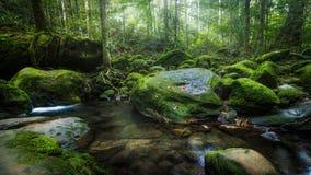 Vattenfall i norden av Thailand täckas med mossa och växter Härlig vattenfall i regnskogen arkivbilder