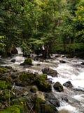 Vattenfall i raneskogen Arkivfoton