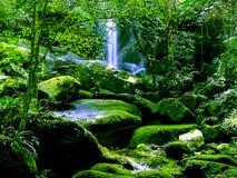 Vattenfall i regnskog Arkivfoton