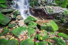 Vattenfall i regnskog Royaltyfri Foto