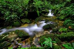 Vattenfall i regnskogen Arkivbilder