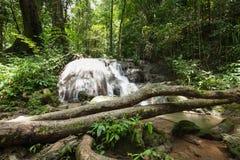Vattenfall i regnskogen Arkivbild