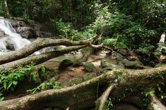 Vattenfall i regnskogen Fotografering för Bildbyråer
