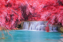 Vattenfall i regnskogen (Tat Kuang Si Waterfalls Royaltyfria Foton