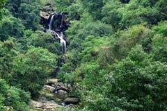 Vattenfall i skog Arkivfoto
