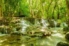 Vattenfall i skog med trädet Fotografering för Bildbyråer
