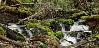 Vattenfall i skog nära Laguna Encantada, Ushuaia, Argentina Arkivfoton