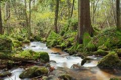Vattenfall i skogen Arkivfoton