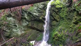 Vattenfall i trän av British Columbia, Cananda Fotografering för Bildbyråer